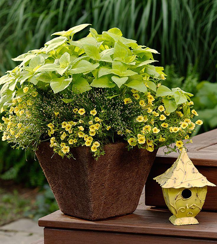 96 Best Images About Wpc Planter Pot: 96 Best Container Garden Recipes Images On Pinterest