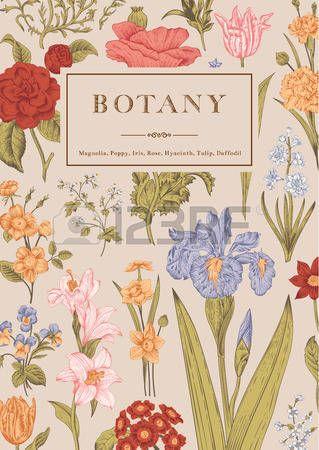 Ботаника. Урожай цветочные карта. Векторная иллюстрация гравюр в стиле. Красочные цветы. photo