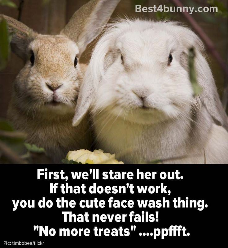 Quotes About Rabbits: 3024 Best Bunny Rabbit Images On Pinterest