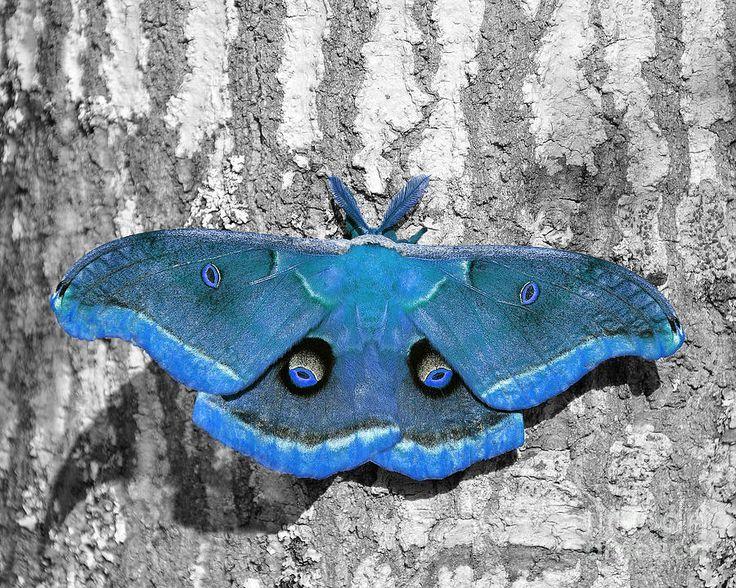 light blue violet color acrylic - Recherche Google