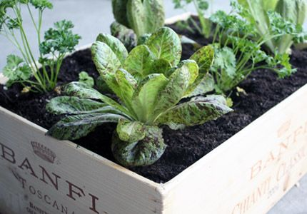 DIY wine box container garden: Safe Wood, Boxes Planters, Boxes Gardens, Wine Crates, Raised Beds, Herbs Boxes, Vegetables Gardens, Wine Boxes, Diy Projects