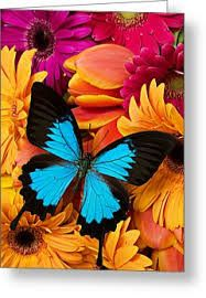 Image result for bright colorful  greeting cards