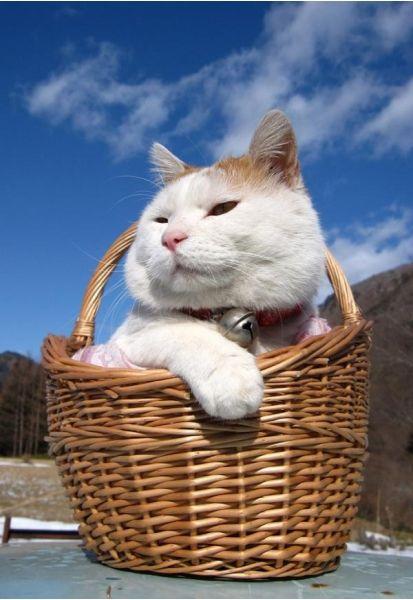 Ленивый кот ShiroNeko
