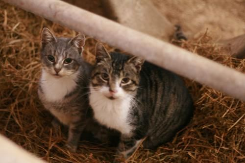Barn Cats For Adoption In Nj