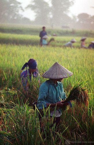 Le Canard Du Mékong: Vietnam