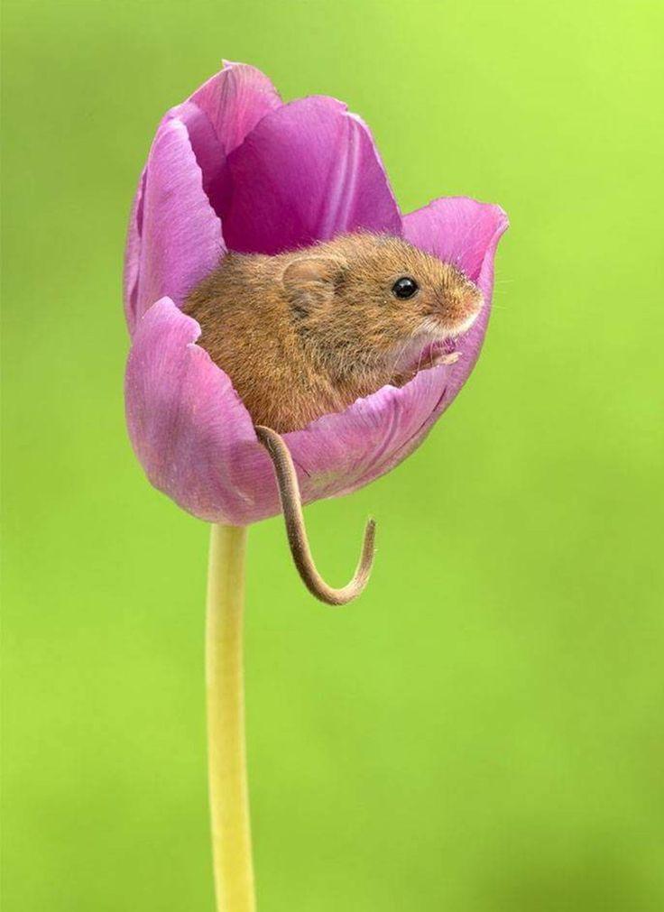 этой картинка красивого мышонка фото