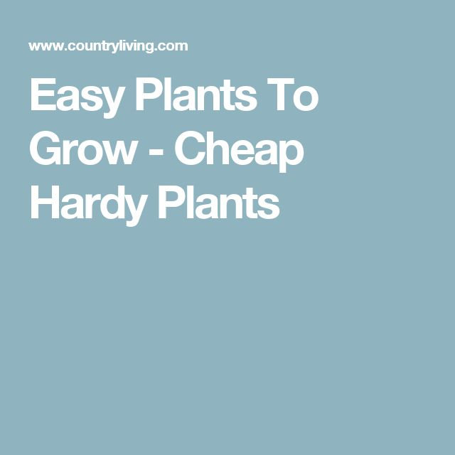 Easy Plants To Grow - Cheap Hardy Plants