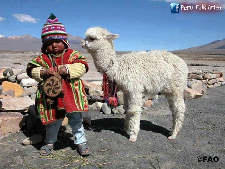 """""""A ver qué hay de fiambre"""" el niño y su alpaquita de Puno, Perú."""