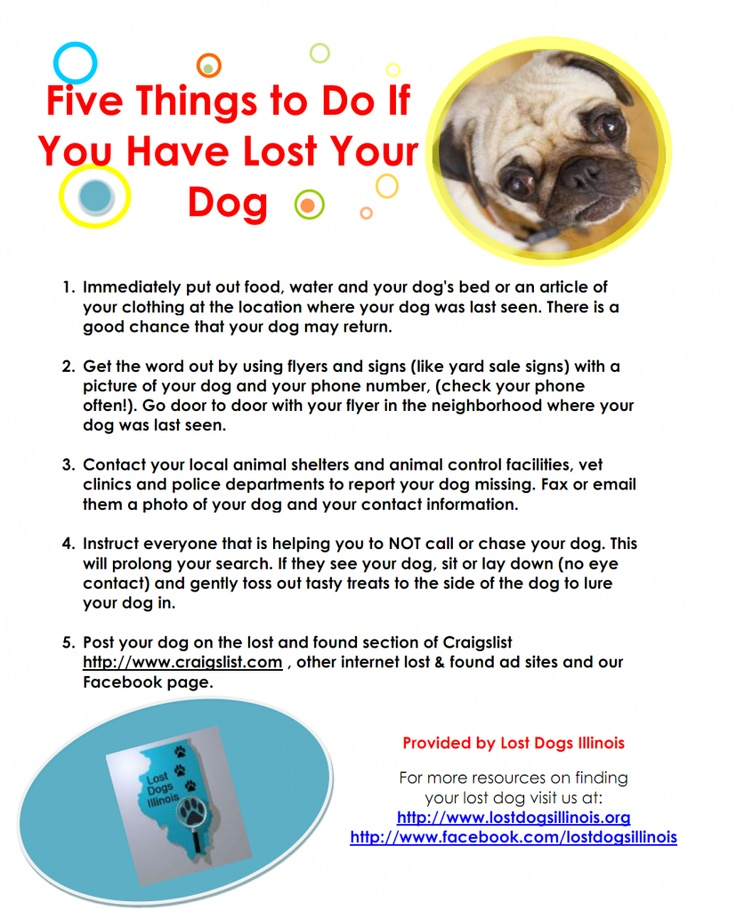 29 Best Tips\/Hints To Help With Lost\/Found Dogs Images On  Missing Dog Flyer Template