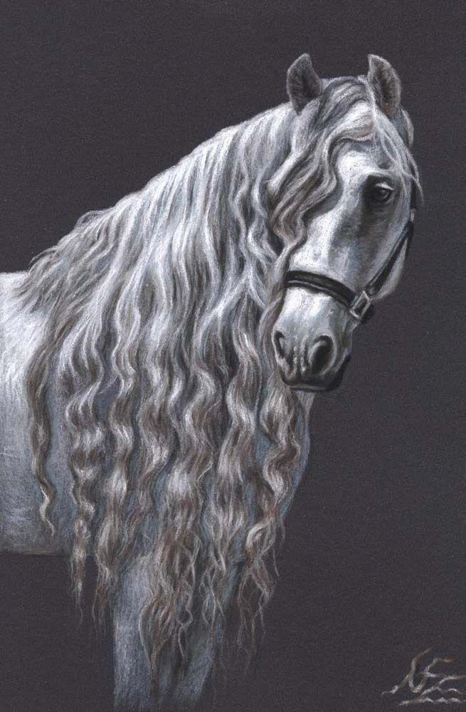 Tolle Pferde Bilder HANNOVERANER, ANDALUSIER oder TRAKEHNER, Kunstdruck A4 Pferd