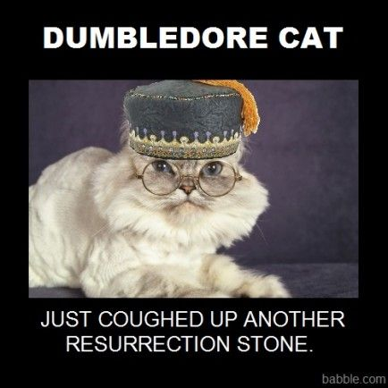Cats Dressed Up Like Harry Potter