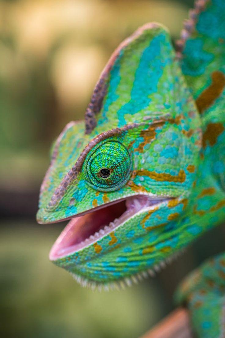 Submission by Egor Kamelev. Discover more free photos from Egor: https://www.pexels.com/u/ekamelev/ #animal #colorful #head