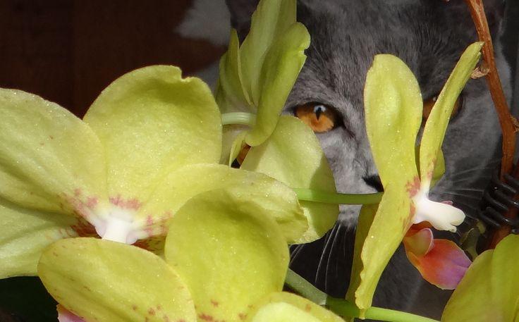 Zafír orchideák közt