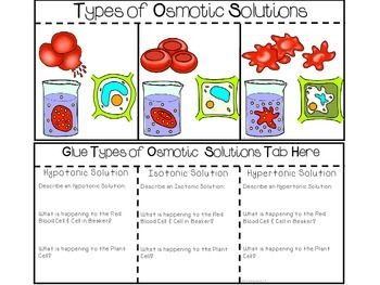 Science Interactive Notebook - Cell Transport: Osmosis Dif