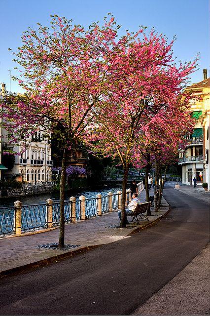 Spring in Treviso, Italy by efilpera, via Flickr
