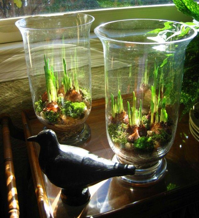 Un petit jardin de verre