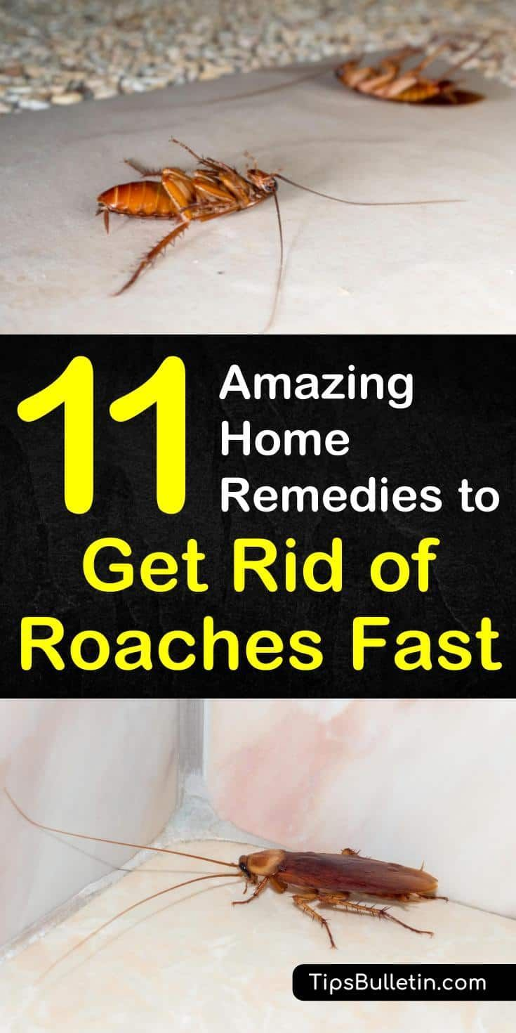 11 Amazing Home Remedies To Get Rid Of Roaches Fast Household Household Pests Home Remedies For Roaches Kill Roaches
