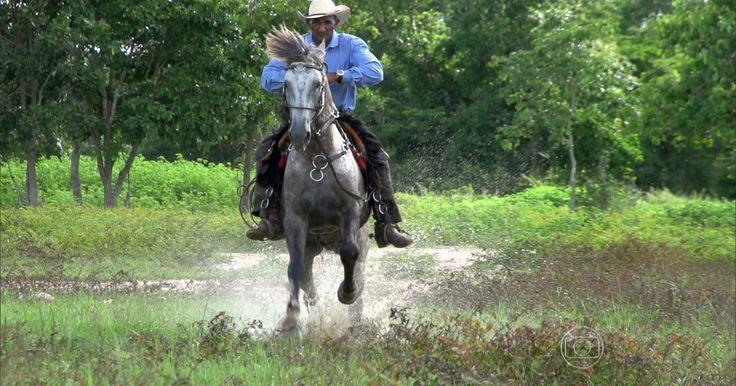 Evolução transforma casco do cavalo pantaneiro em 'pneu de chuva'