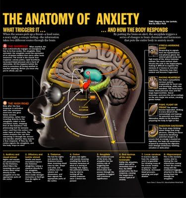 The Anatomy of Anxiety - This diagram appeared in the 6/10/02 issue of Time Magazine Anatomie der Angst #infografik