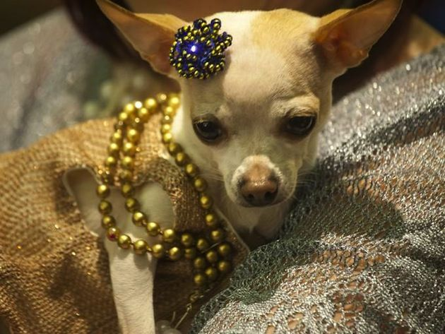 Pampered Pooches at the New York Pet Fashion Show