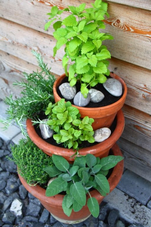Eigenes Gemüse – auch ohne Garten