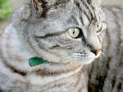 Miedo, fobia y ansiedad en los gatos | Cuidar de tu mascota es facilisimo.com