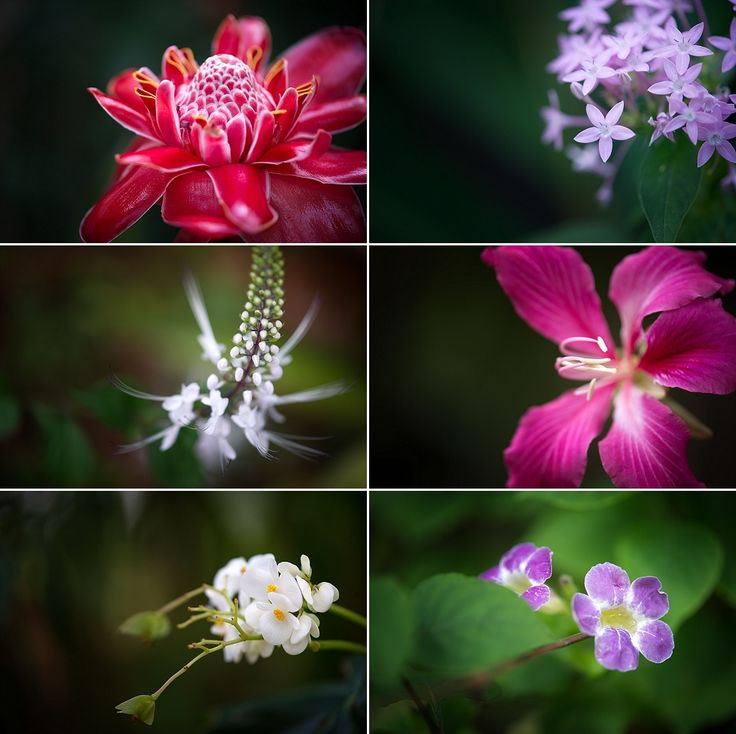 Jamaican flowers