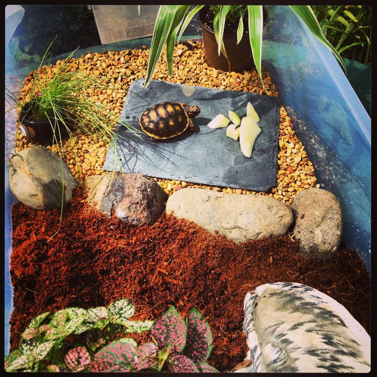 1000 Images About Baby Tortoise Home On Pinterest