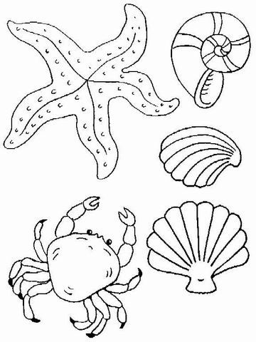 Beach Shell Coloring Pages Printable Sketch Page