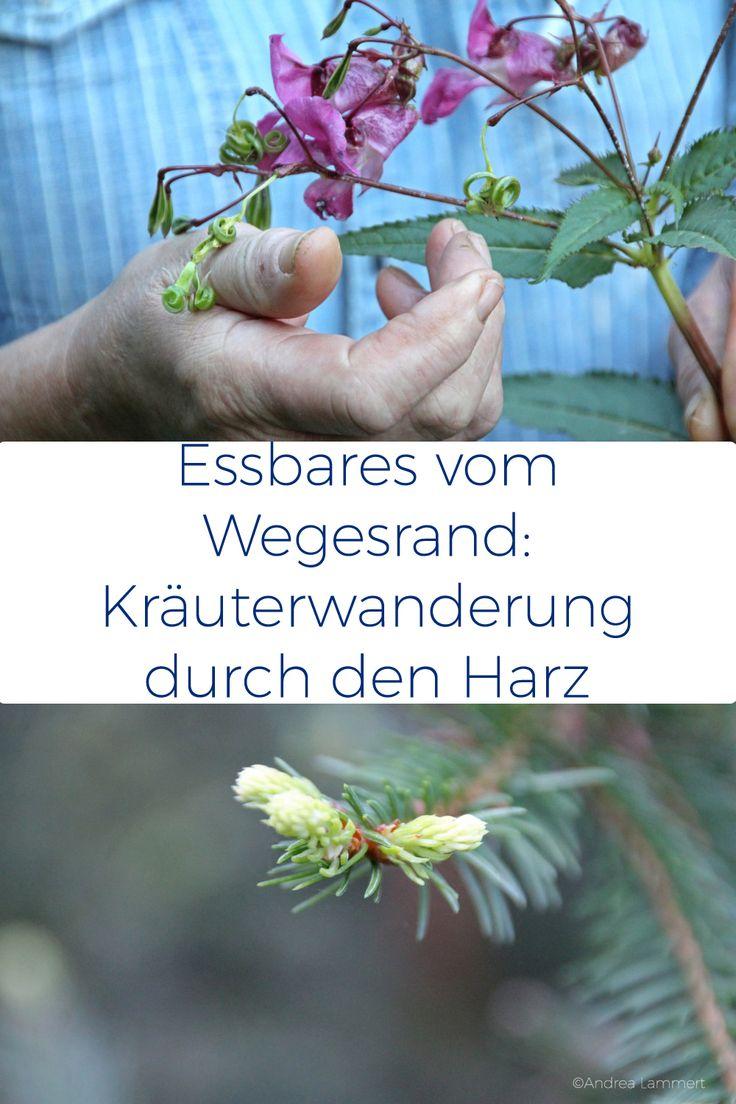 http://indigo-blau.de/bad-lauterberg-kraeuterwanderung-im-harz