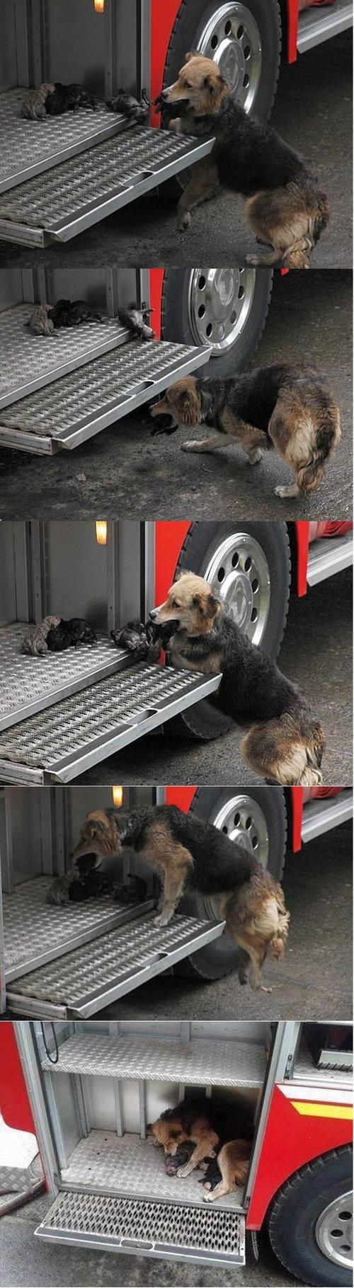 tierno perros