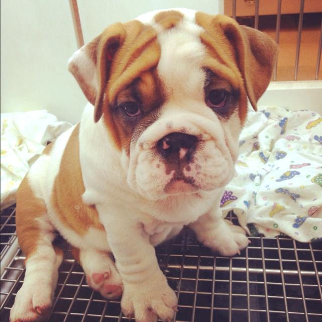 Want thissss.Animal Planets, Animals, Fluffy Animal, Adorable Animal