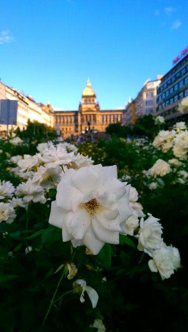 Piazza venceslao, Praga