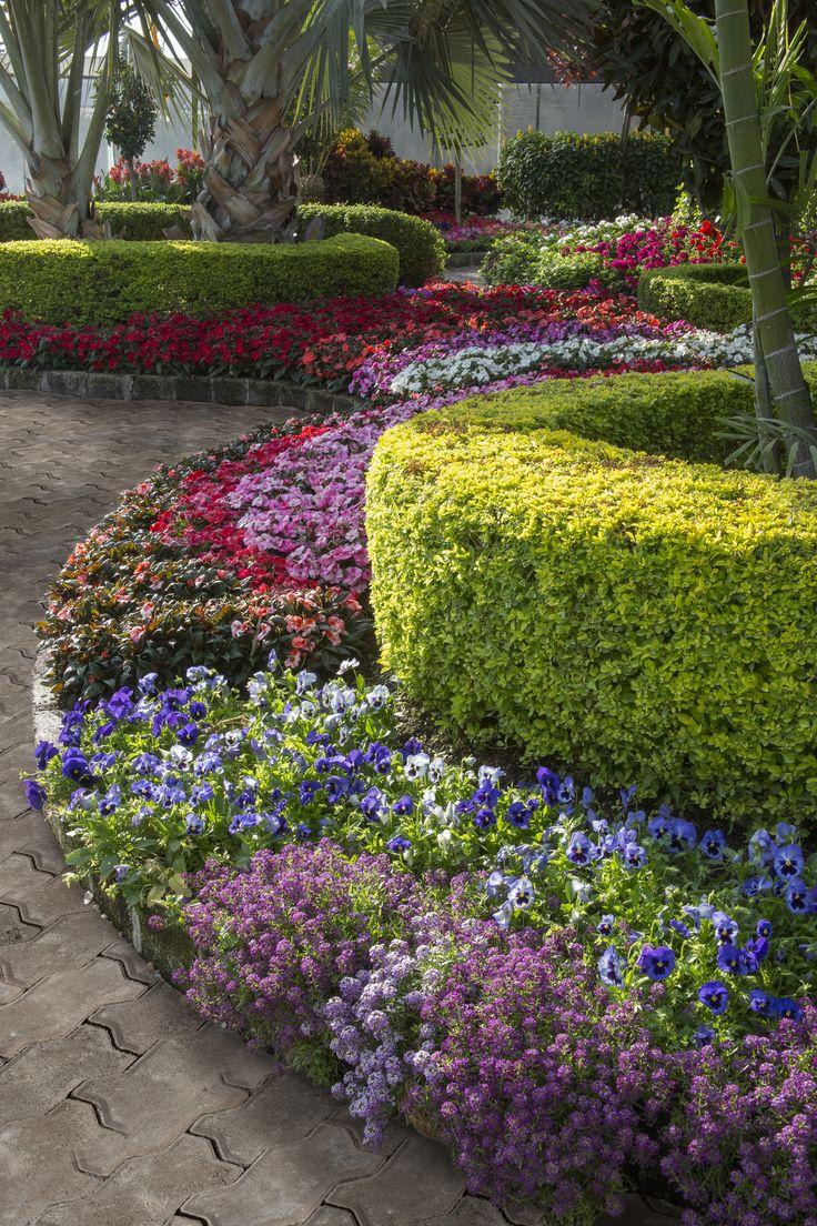 ¡Crea increíbles espacios con plantas y flores!
