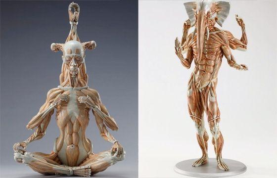 Anatomy classes nyc