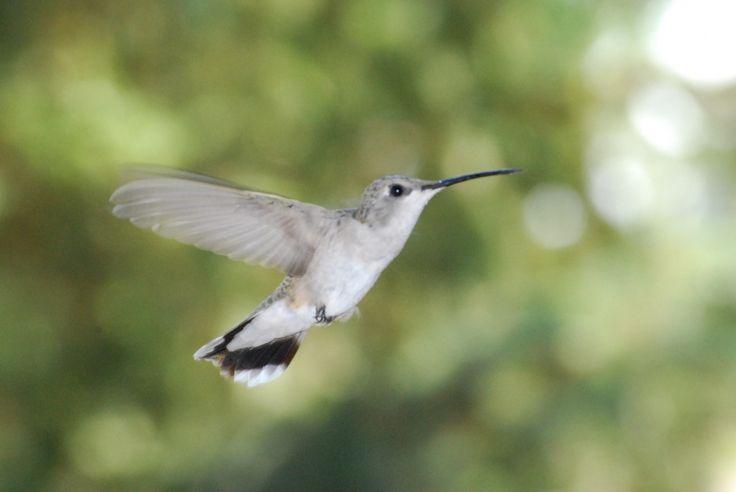 Best Recipe for Hummingbird Food