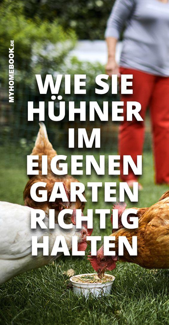 Hühner im eigenen Garten richtig halten | Hühner im garten ...