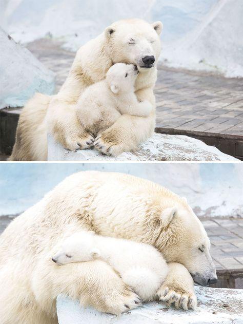 Ach du meine Güte, ist das knuddelig!  Toll anzusehen, so liebevoll die Beiden miteinander sind.