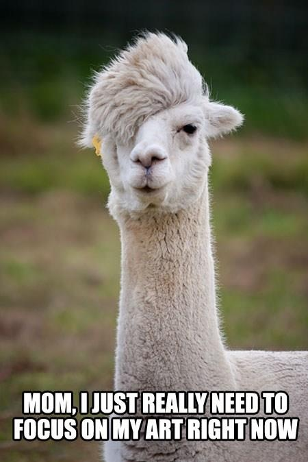 Hipster, Flames, Animal Pictures, Funny Pictures, Alpaca, Funny Animal, Napoleon Dynamite, So Funny, Hair