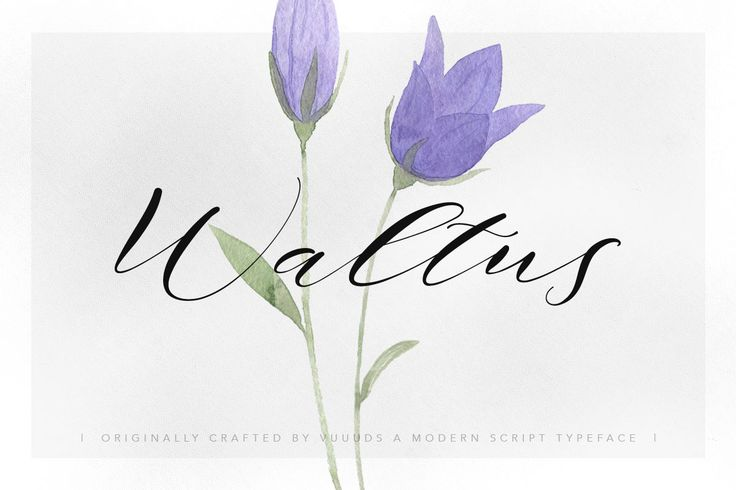Delicate #script #font Waltus by vuuuds on @creativemarket - #scriptfonts #fonts - pinned by  www.website-designers.co.nz