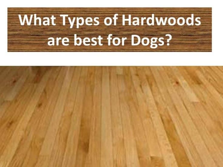 Best Hardwood Flooring For Dogs Types, What Is The Best Laminate Flooring For Pets
