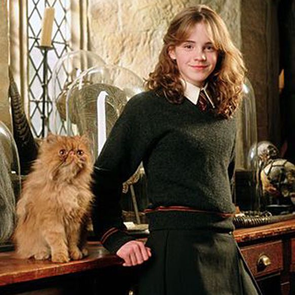 Hermione's Crookshanks Might Have Connected Her To The ...  |Harry Potter Hermione And Crookshanks