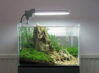 Nano Aquarium is een klein aquarium en daarom kunnen niet alle aquariumplanten en aquariumvissen erin leven