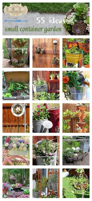 55 Innovative Ideas for Small Container Gardens