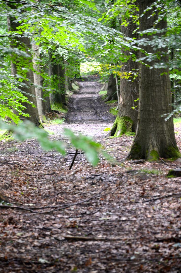 #Twente #Forest