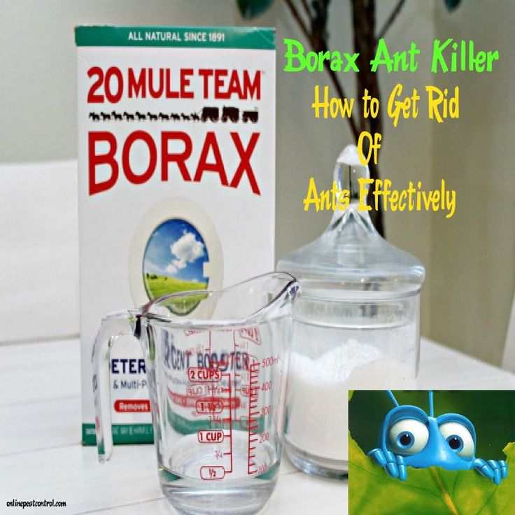 1000 ideas about borax ants on pinterest borax for ants ant killer borax and clean washer. Black Bedroom Furniture Sets. Home Design Ideas