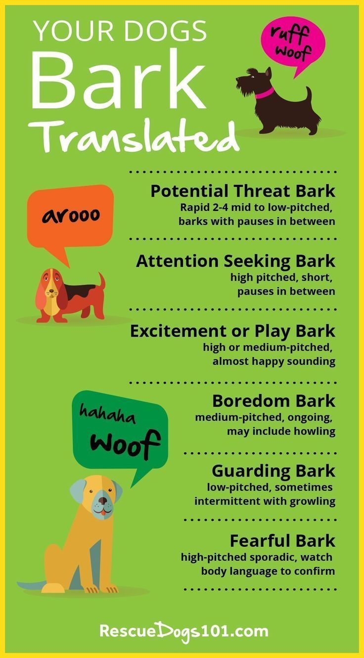 Types Of Dog Barks Dog Barking Dog Training Stop Dog Barking
