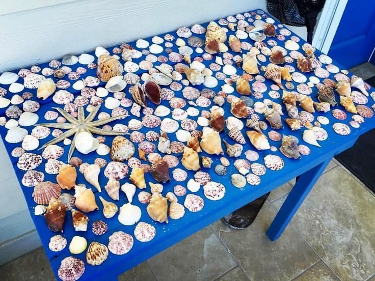 Shellmazing haul on the beach at Island Inn Beachfront Resort @islandinn #sanibel #shellingvacation #beachfinds #seashells
