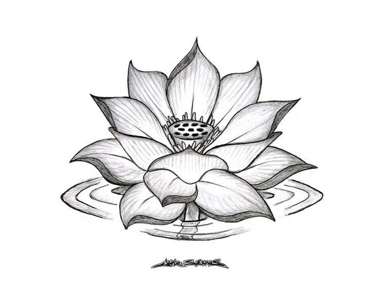 34 best lotus flower tattoo outline images on pinterest lotus lotus flower tattoo outline like tattoo lotus outline tattoo mightylinksfo