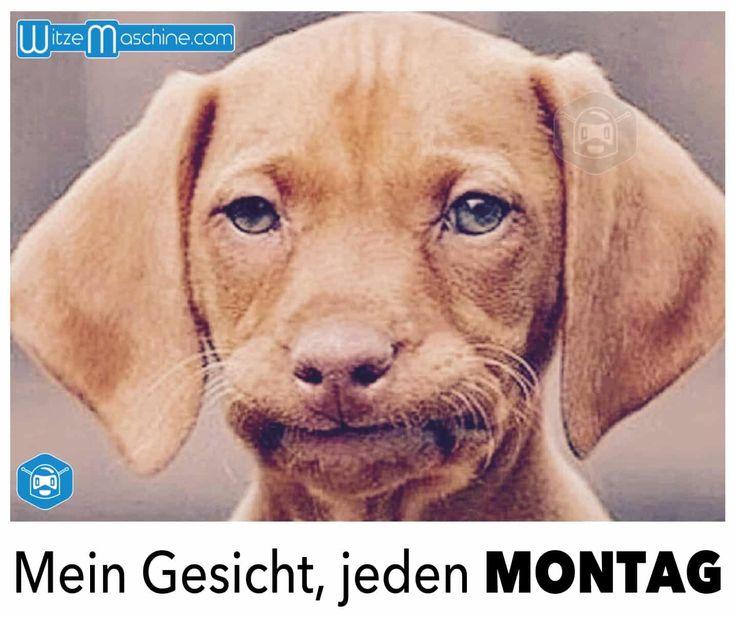 Die 10 Besten Montags Sprüche Kaufdex: Die Besten 25+ Lustige Hundegesichter Ideen Auf Pinterest